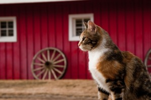 How To Keep Barn Cats Healthy