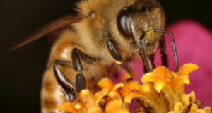 Small Win For Bees: EPA Issues New Pesticide Labels
