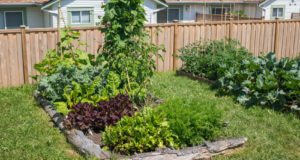 Gardening On A Budget: Tips To Saving Money