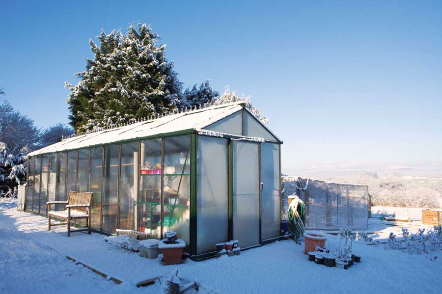 Best Vegetables To Grow In An Unheated Greenhouse  Off The Grid News