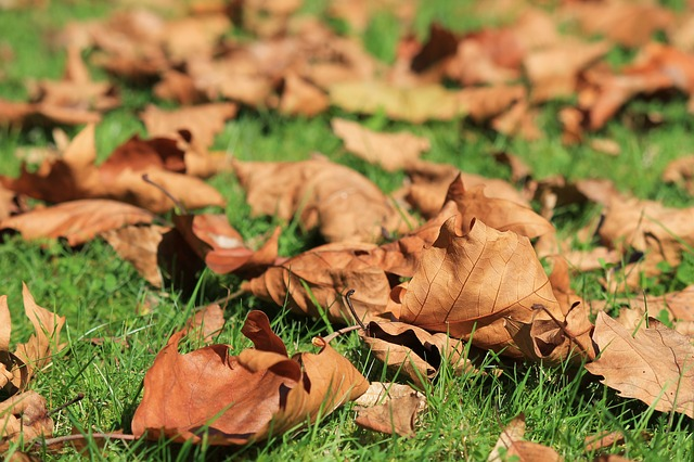 How Autumn Leaves Can Become 'Miracle Mulch' For Your Spring Garden