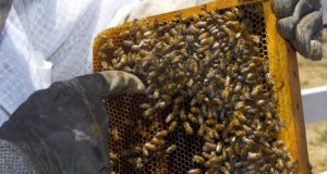 Beekeeping 101: Picking The Best Hive Design For Your Homestead