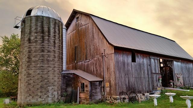 The 3 Best Livestock For New Homesteaders
