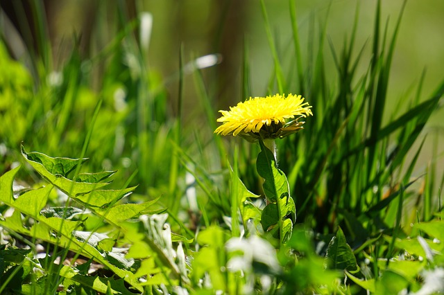 The Cheapest, Quickest Ways To Keep Your Garden Weed-Free