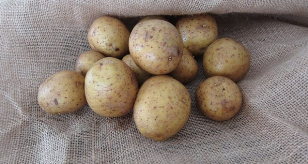 How To Grow Potatoes Indoors, Using Straw