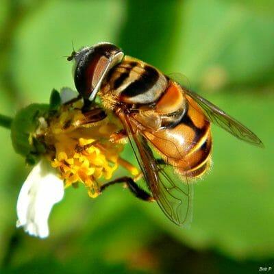 5 Beneficial Garden Bugs You Should NEVER Kill