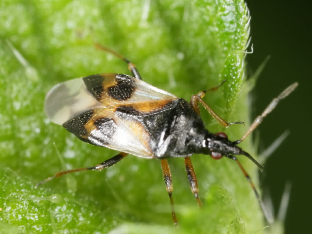 5 Beneficial Garden Bugs You Should NEVER Kill - Off The ...