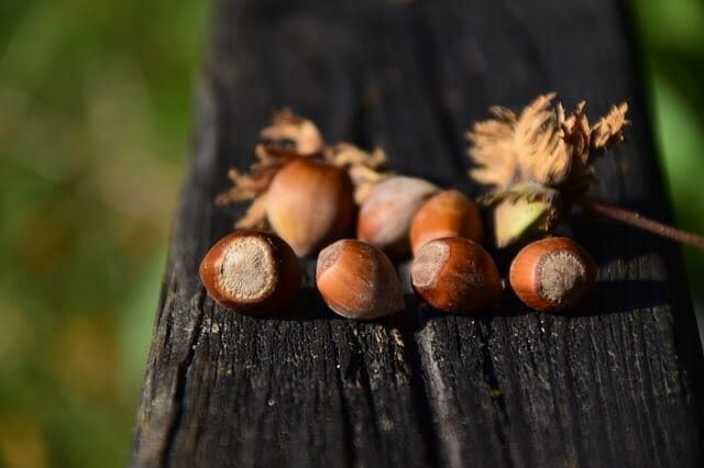 8 Wild Nuts You Can Forage For Each Fall