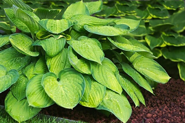 5 Herbs Every Homesteader Needs In Their First-Aid Kit