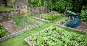 Planning Your Garden In Six Easy Steps