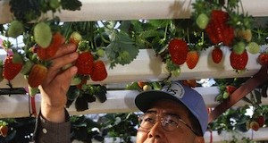 Have You Considered Hydroponics Lately?