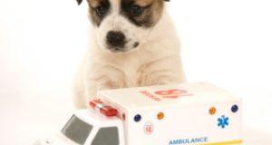 Natural Remedies For Pet Ailments