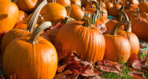 8 Things Worth Knowing About Pumpkin