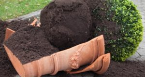 Protecting Your Garden From Severe Weather