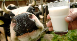 How To Handle Raw Milk And Make It Last Longer