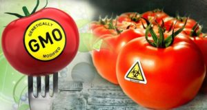 4 GMO Food Failures We Should Never Forget