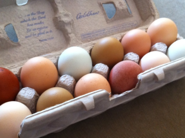 7 Tips For Keeping Backyard Chicken Eggs Safe To Eat - Off ...