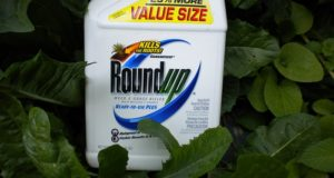 Shocking Study: Roundup Weed-Killing Ingredient Found In Breast Milk