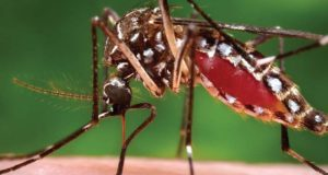 Millions Of GM Mosquitoes To Be Unleashed In US?
