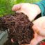 Why Your Composting Strategy Needs Worms