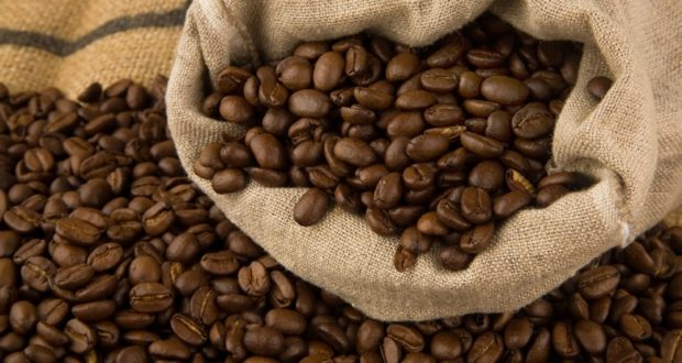 Continental Extreme Contact >> Simple Steps To Growing Coffee – Even Where You Live - Off ...