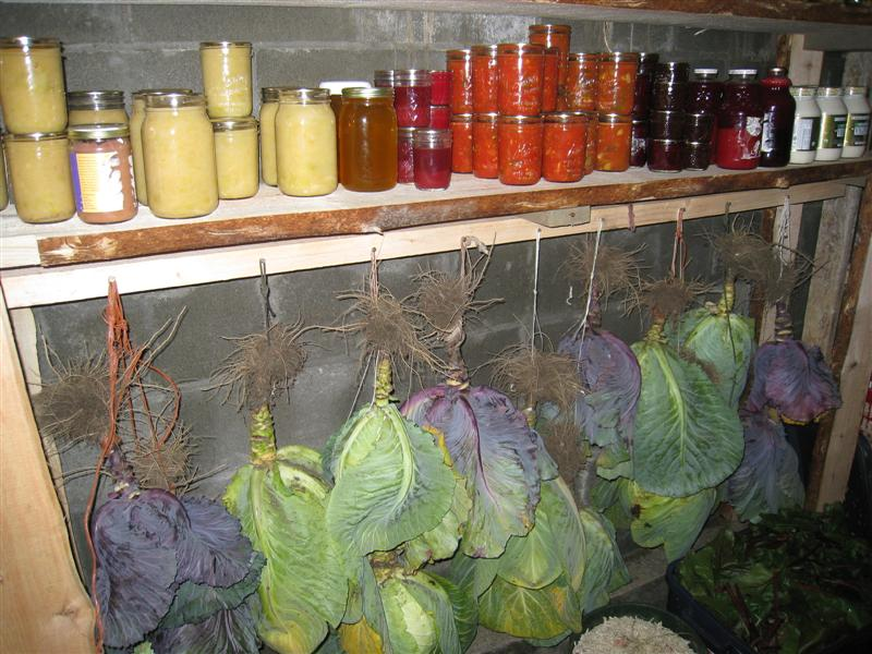 How To Store Fresh Vegetables For Months Without A Refrigerator Off The Grid News