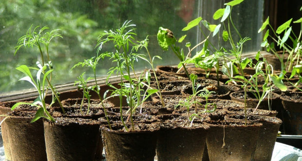 Starting Seeds, The Easy And Smart Way