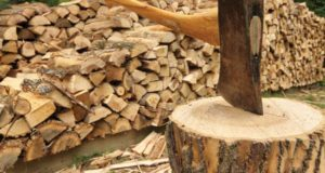 Harvesting Firewood: Why Conventional Wisdom May Be Wrong