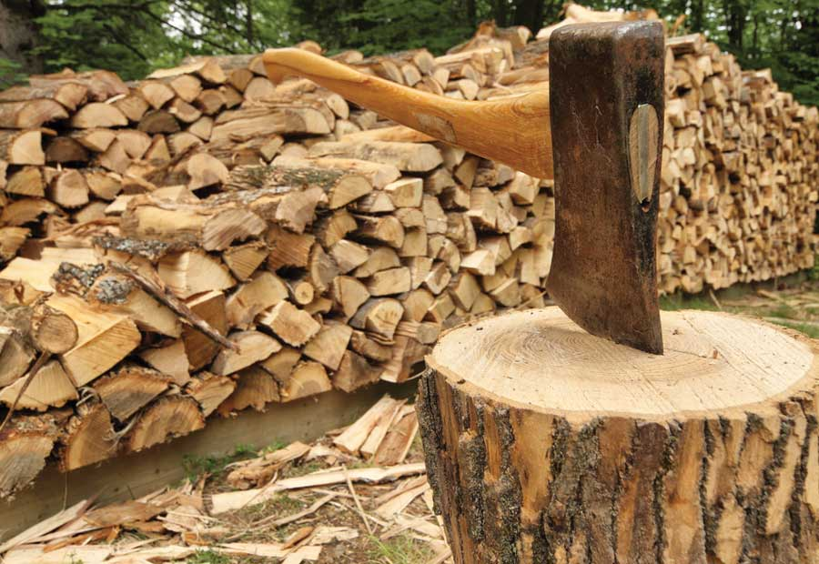 Harvesting Firewood Why Conventional Wisdom May Be Wrong