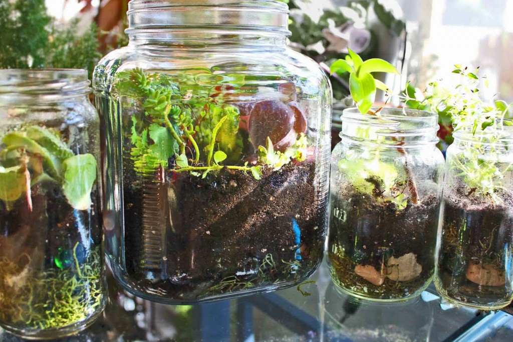 Gardening In A Bottle 8 Edible Plants You Can Grow An Indoor Terrarium Off The Grid News