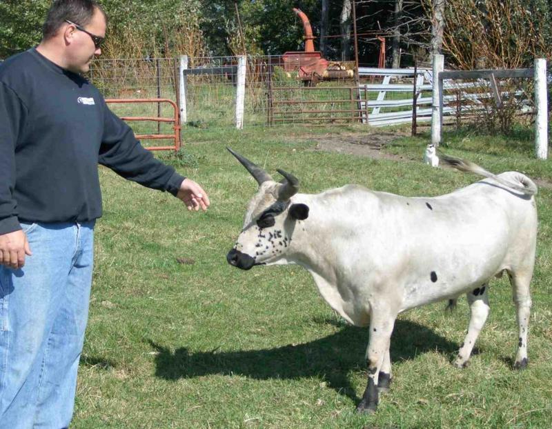 5 Reasons Miniature Cows Are A Better Option Than