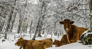 How To Ensure Your Livestock Survive The Winter