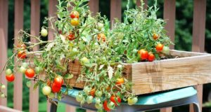 No-Frills Container Gardening For The Urban Homestead