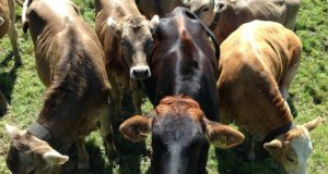 4 All-Natural, Chemical-Free Wormers For Your Livestock