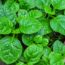 5 Super-Fast Indoor Vegetables You Can Grow In About A Month