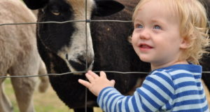 The Surprising Way 'Farm Life' Keeps Kids From Getting Sick