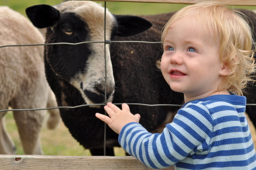 How The 'Farm Effect' Keeps Kids From Getting Sick