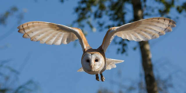 How To Attract Barn Owls (And Keep Your Homestead Rodent-Free)