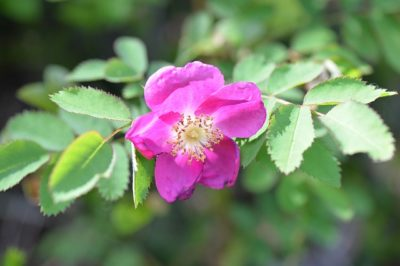 7 Forgotten Plants The Native Americans Used For Medicine