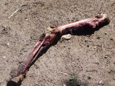 3 Survival Uses For Bones, Straight From The Native Americans