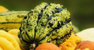 Squash 101: Tricks To Keep Your Harvest Stored For MONTHS