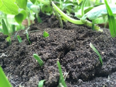 4 Common Soil Problems (And How To Easily Fix Them)