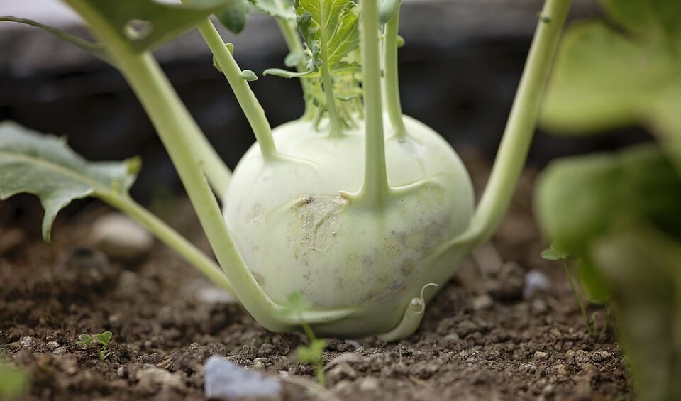 Branch Out! Here's 5 Weird (But Delicious) Vegetables You Should Plant This Year