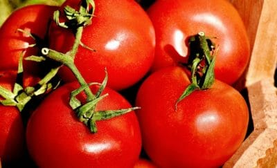 Tomato-Growing Mistakes Every Gardener Makes