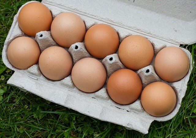 Can Herbs Boost Your Chickens' Egg Production? Yes!