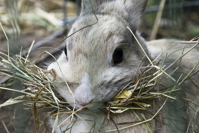 How To Feed Rabbits Sustainably Without Store-Bought Pellets