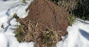 How To Keep Your Compost Pile Churning … All Winter Long