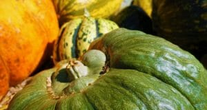 11 Amazing Ways Squash Can Keep You Healthy