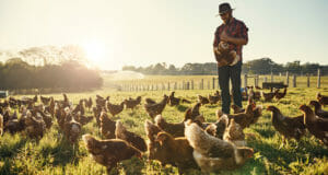 Ten Ultra Low-Cost Chicken Feeds You Can Produce Yourself