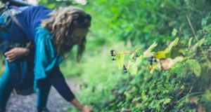 Wildcrafting And Foraging Means Fabulous Food And Family Fun